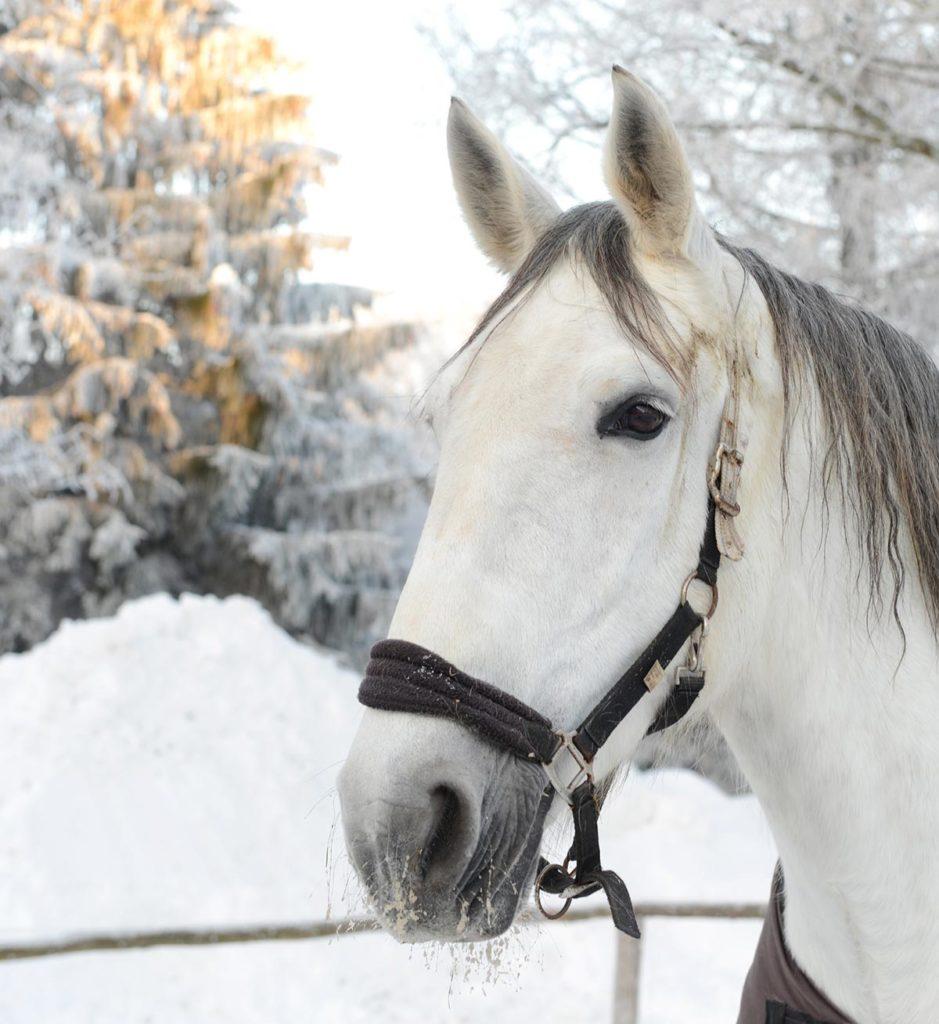 Pferd vom Waldgasthof Bad Einsiedel
